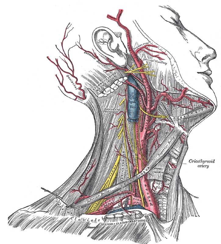 Removal Of Salivary Glands Lymph Nodes In The Neck And Scars
